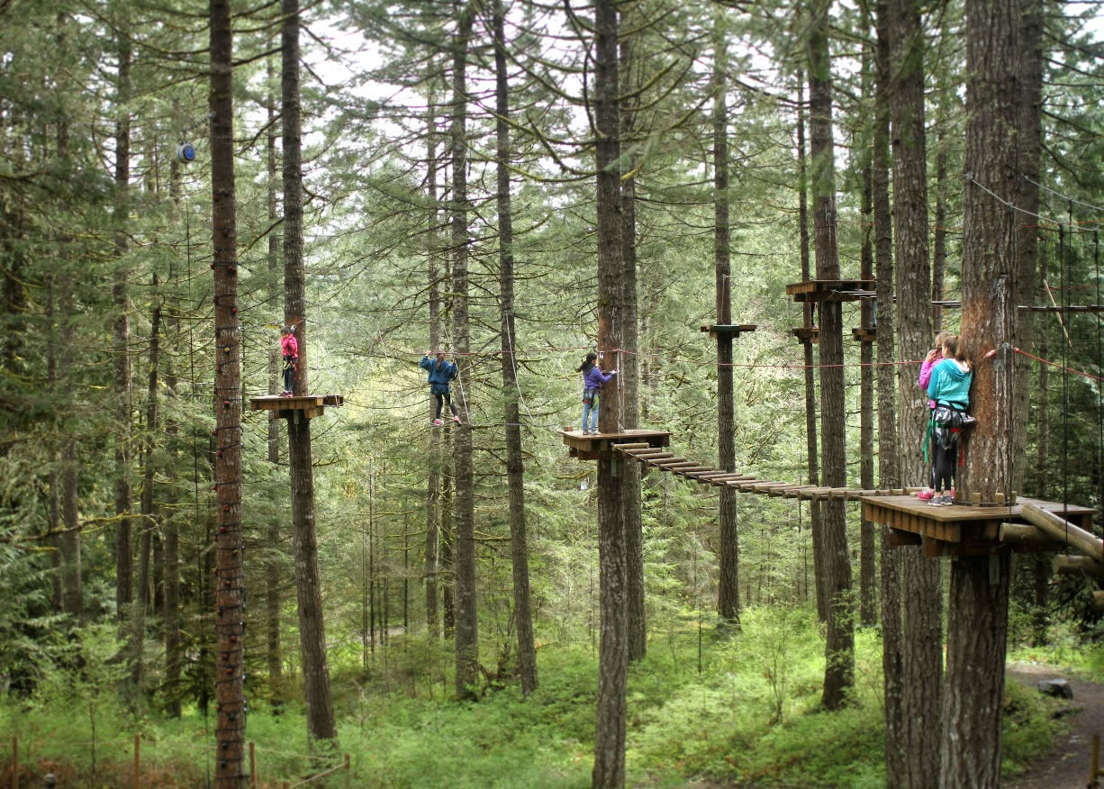 Aerial Obstacle Course – Tree to Tree Adventure Park