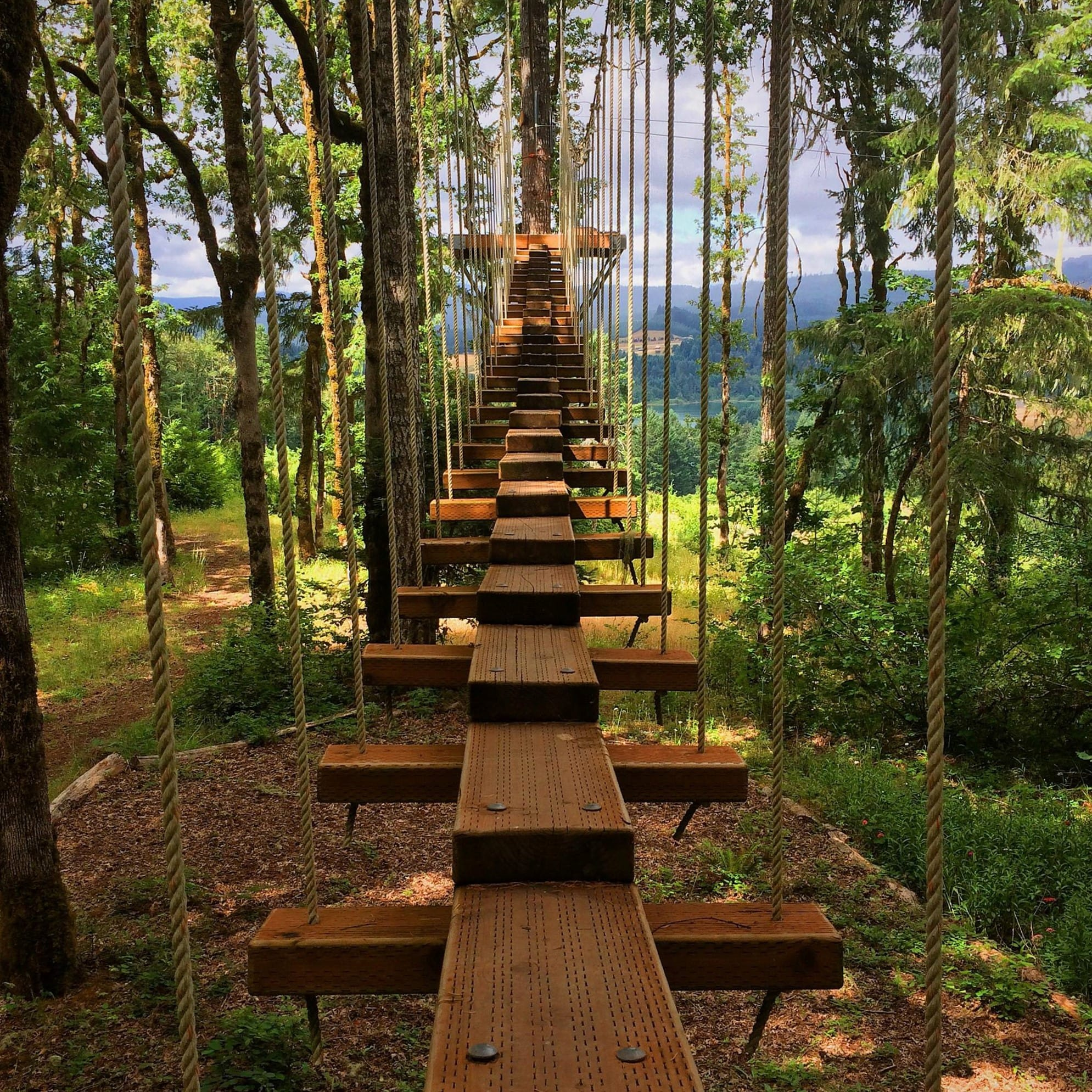 High Ropes Course Bridge - Tree to Tree Adventure Park